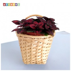 DecoBox米白藤編壁掛大花藍-2個(花藍,花盆, 壁掛, 玄關,鑰匙圈收納)