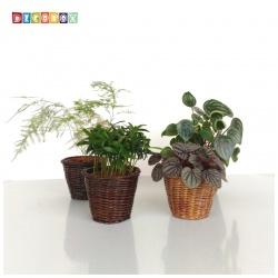 DecoBox鄉村風秋藤3吋小盆套(4個)(多肉花架,園藝.花架.花台.筆筒)